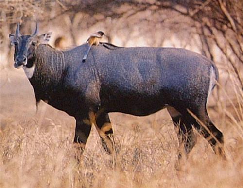 Wildlife in Abohar