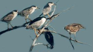 Wildlife Sanctuaries Jammu