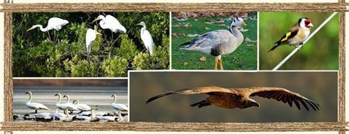Mangalavanam Bird Sanctuary Address
