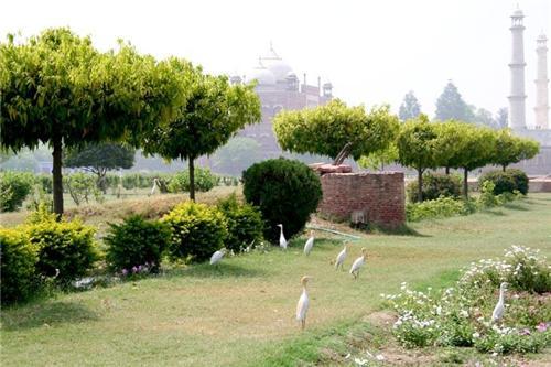 Inside Mehtab Bagh