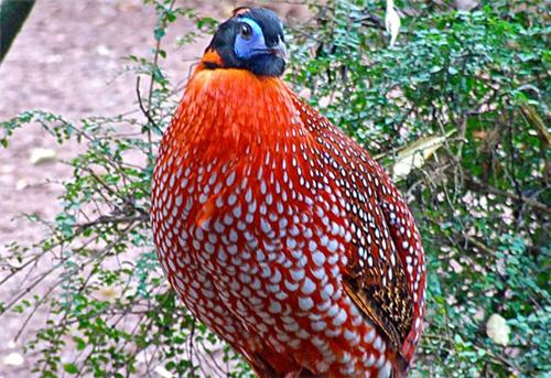 Dampha wildlife sanctuary
