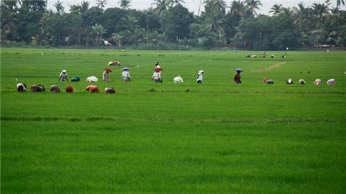 Kuttanad near Alappuzha