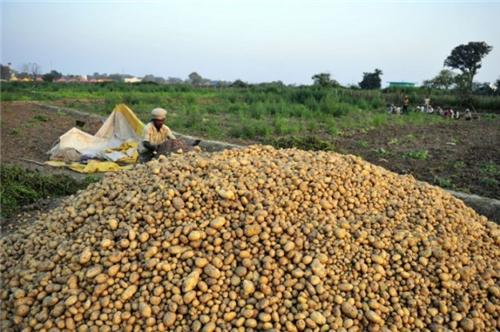 Agriculture in Allahabad