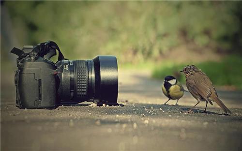 Photography in Ambala