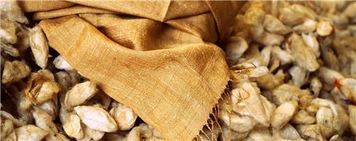 Assam Silk Wonders
