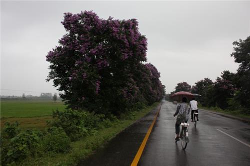 Roadways in Assam