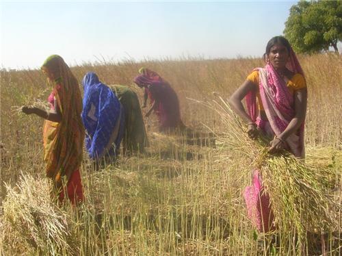 Agriculture by Sahariya Tribe