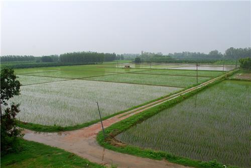 Barnala Lies in the Northern Fertile Plain