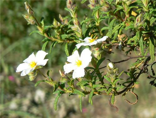 Flora and Fauna Batala