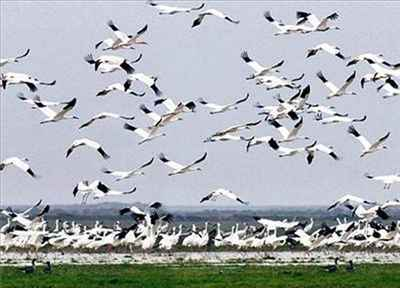 About Bharatpur