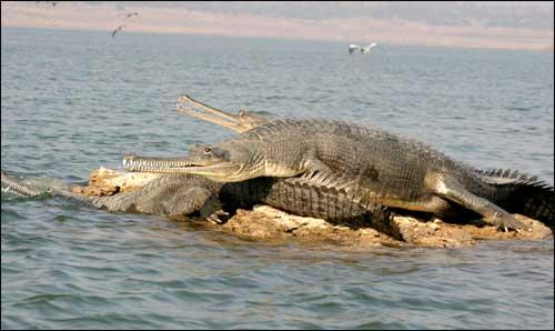 Wildlife in Bhind