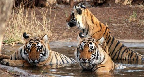 Wildlife sanctuaries in Bhiwadi