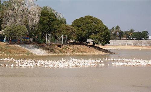Hamirsar Lake