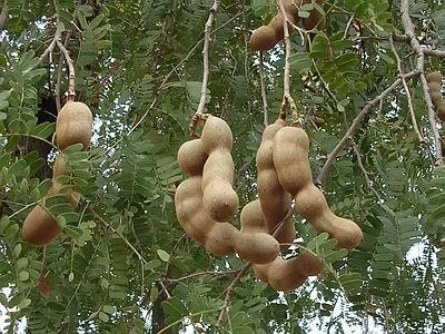 Flora & fauna on Bhuj