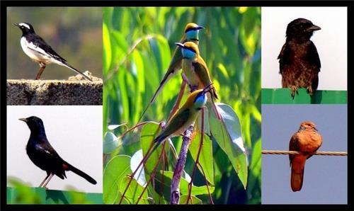 Bird Sanctuary in Bihar