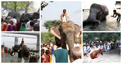Famous fairs in Bihar