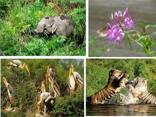 Wildlife Destinations in Bihar