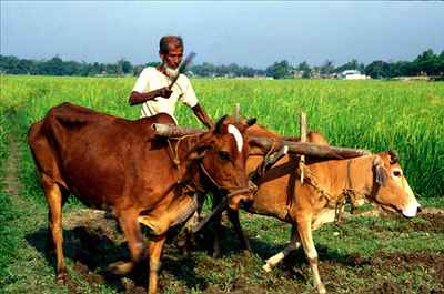 Agriculture in Kaimur