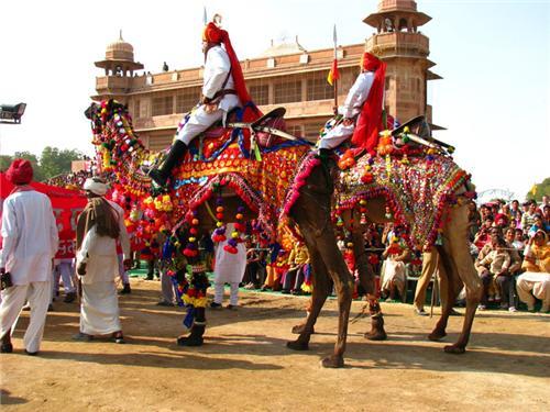 Camel Festival in Biakner