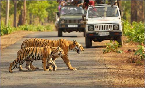 Wildlife in Bilaspur