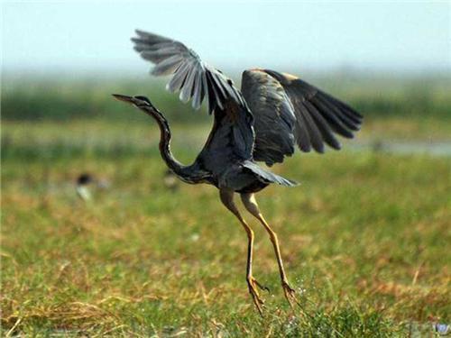 Wildlife in Bundi