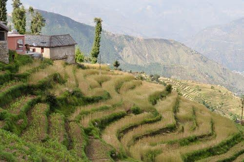 Farming around Chamba