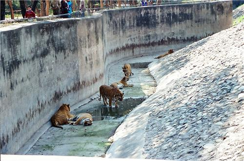 Zoos in Chandigarh