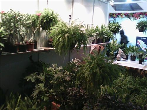Landscape and Gardening Expo, Chandigarh