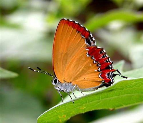 Species of Butterflies in Butterfly Park in Chandigarh