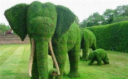 Eye Catching Sights of Topiary Park in Chandigarh