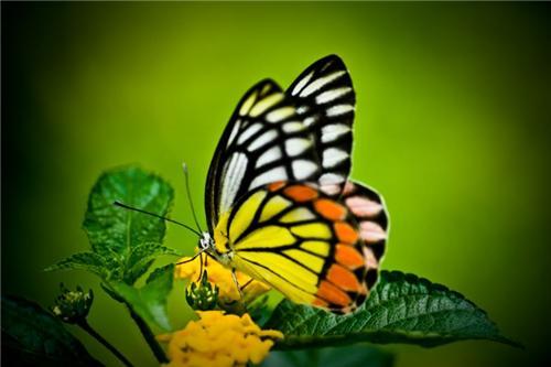 In Butterfly Park in Chandigarh