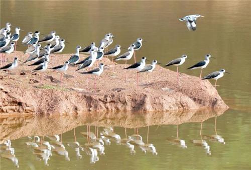 Sukhna Wildlife Sanctuary in Chandigarh