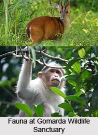 Gomarda Reserve Forest