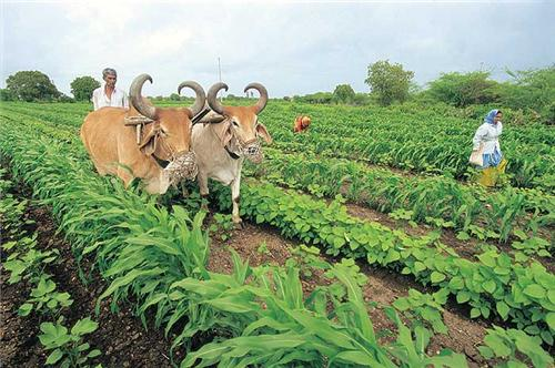Economy of Chhindwara