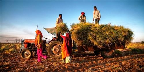 Agriculture in Thanesar