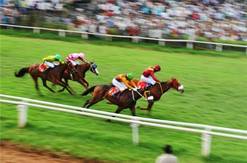 A race in progress at the bangalore turf club