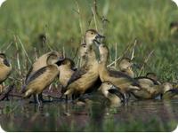 Bharatpur Birding