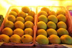 Mango City Salem
