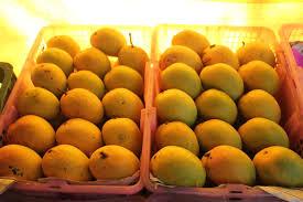 Mango City Salem