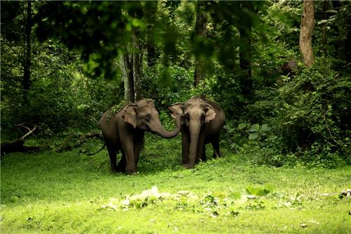 Wildlife Sanctuaries near Bangalore
