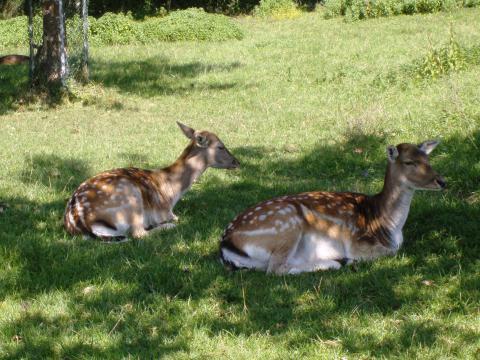 Kuruvampatti Wildlife Park