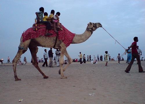 Camel Ride - Cuddalore Silver Beach