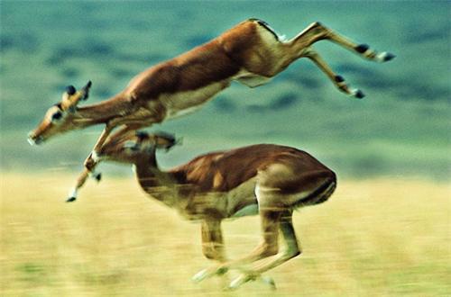 Wildlife Sanctuaries in Cudappah