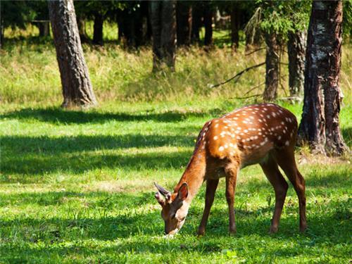 Wildlife of Dadra and Nagar Haveli