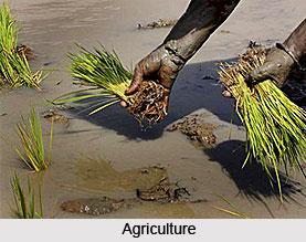 Economic Gwowth in Darbhanga