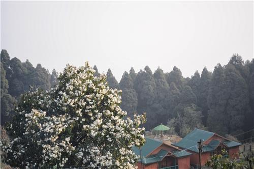 Majestic Ambiance of Chatakpur in Darjeeling