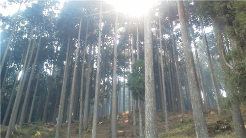 Romantic Locations at Lamahatta in Darjeeling