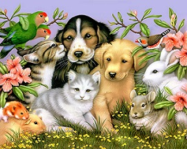 Pet Shops in Delhi