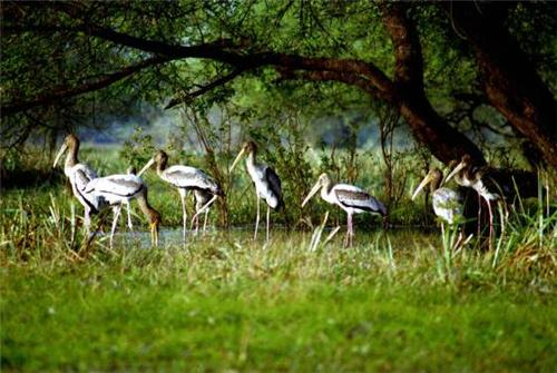 Widllife Destinations Near Delhi