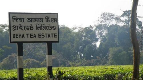 Deha tea estate